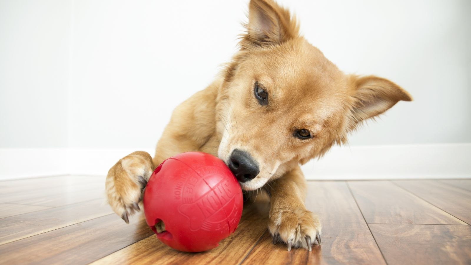 Interactive Dog Toys save Money by Acquiring the Right Ones